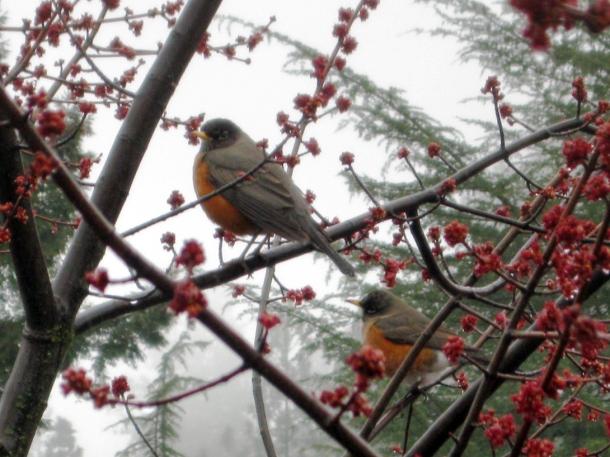 robins outside