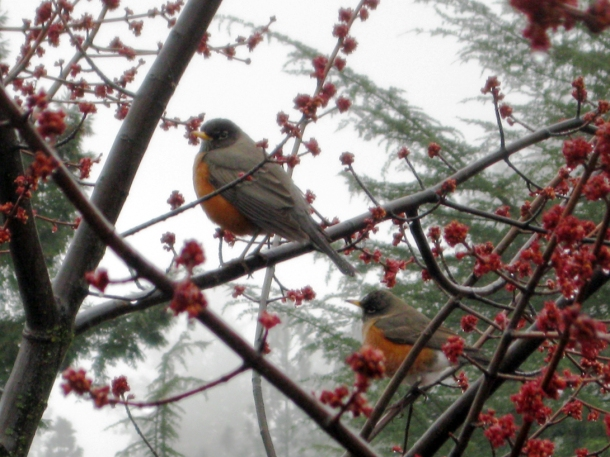 robins outside